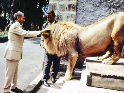 As a reward for reading the story, here is a picture of Emperor Haile Selassie I patting a lion on the head, a politician not content with merely kissing babies.